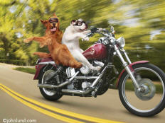 picture of dogs on motorcycles